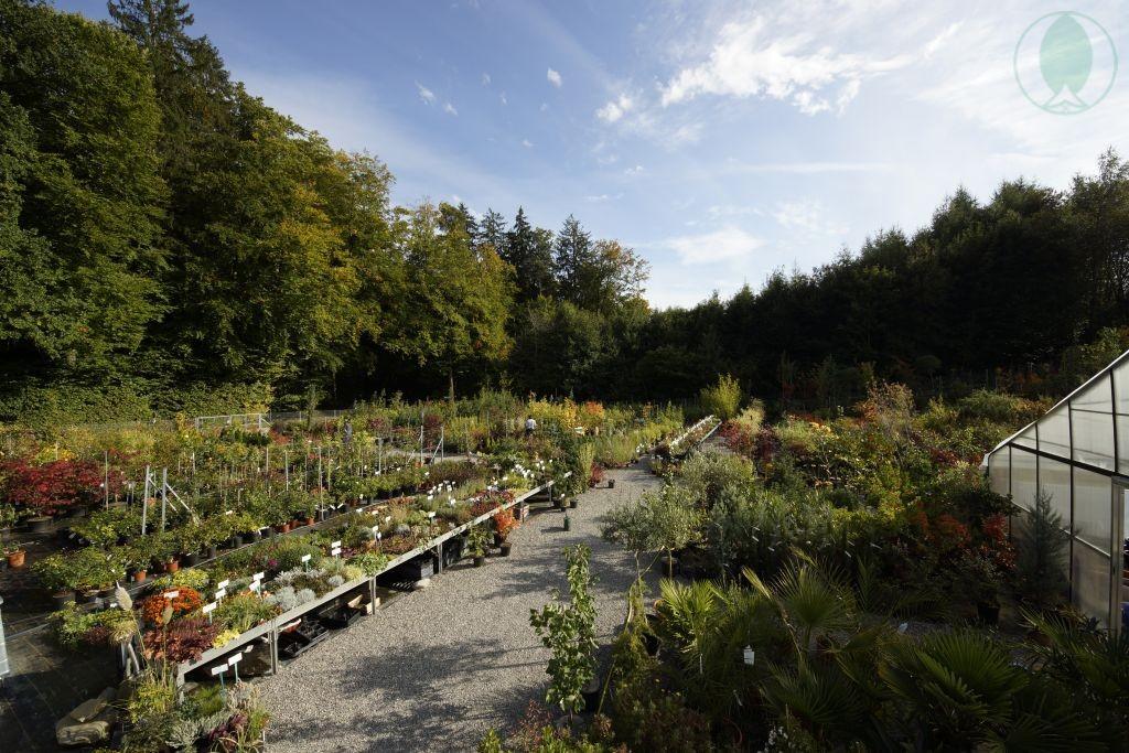 Pflanzencenter Fehr