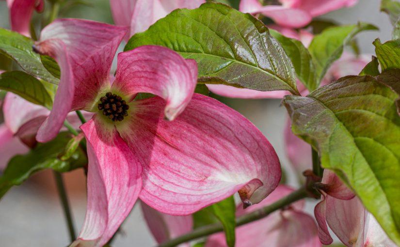 Verkauf und Beratung im Pflanzencenter Fehr ab 27. April 2020 wieder möglich